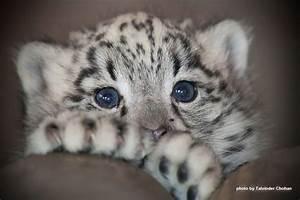 17 Best images about Photos on Pinterest | Snow leopard ...