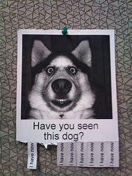 Have You Seen This Dog Poster Funny
