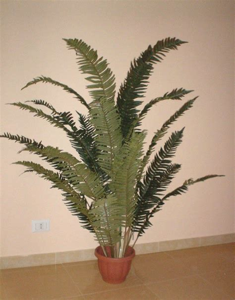 felce da vaso felce tropicale h 160 in vaso con 16 foglie san michele