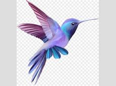 Hummingbird Free content Clip art Color cute birds png