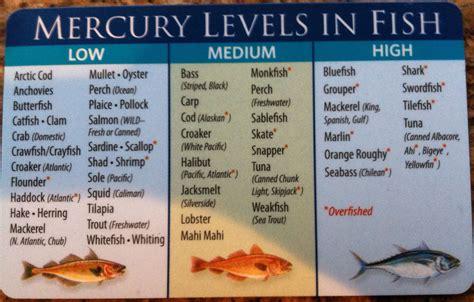 mercury fish mackerel seafood shark pregnancy pollock salmon tuna canned albacore catfish light health steaks tilefish eat metal nutrition king