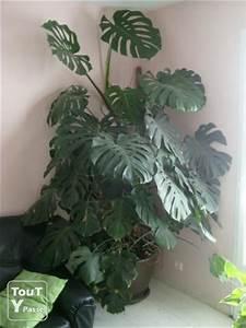 Grande Plante Verte : grande plante verte vend e ~ Premium-room.com Idées de Décoration
