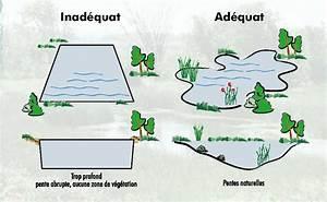 construction d39etang et amenagement de lac canadianpond With delightful plan de bassin de jardin 11 creer un plan deau pour ses canards