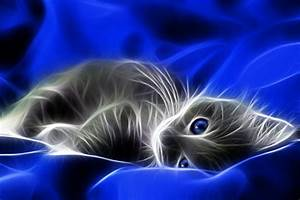 Download Neon Cat 480 X 320 Wallpapers