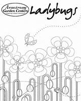 Coloring Ladybug Sheet Blooming Field Let sketch template