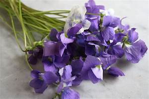 What's Cooking in your World?: Day 130.5 Candied Violets ...
