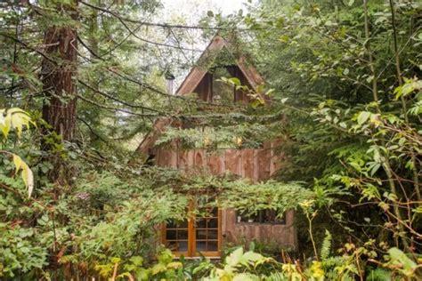 tiny zen cabin   forest