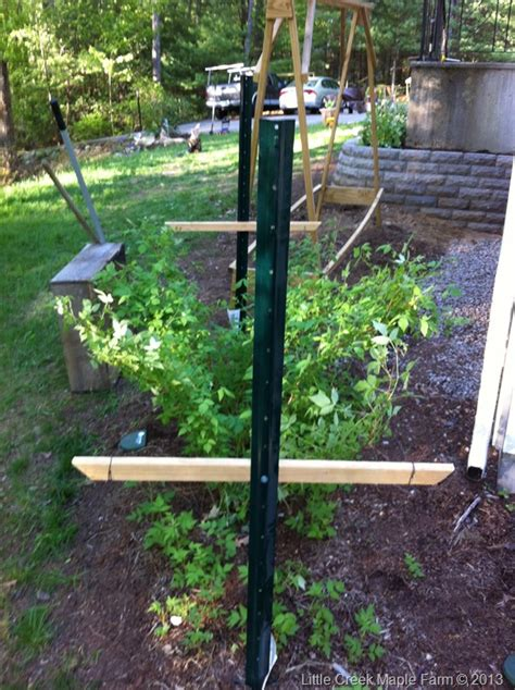 Garden Update « Little Creek Maple Farm