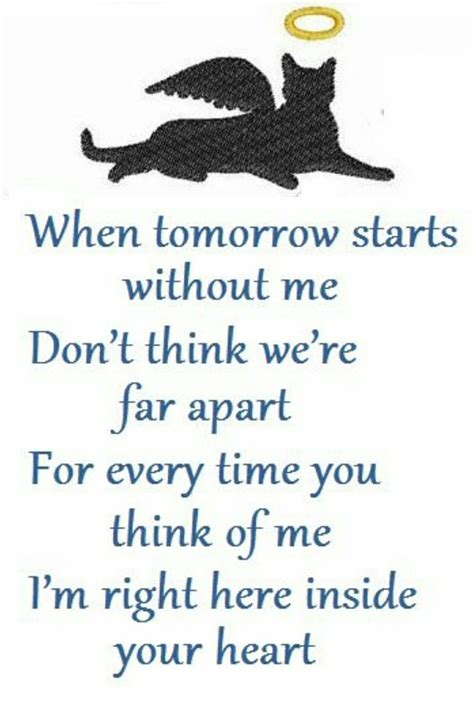 cat grieving  heart cats pet poems cat quotes pet loss