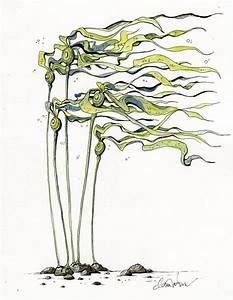 Bull Kelp by Claire Watson   Seaweed   Pinterest   Sea art ...