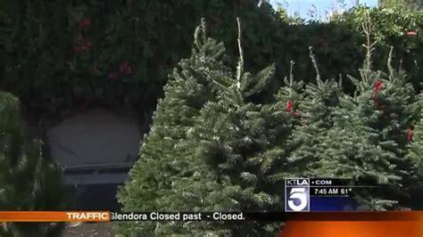 christmas trees at armstrong garden centers ktla 5 los