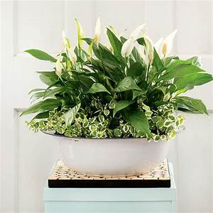 4 durable indoor plants for your home Canadian Living