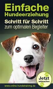 Fahrradkorb Hund Hinten : hunde fahrradkorb gro e auswahl an fahrradk rben f r hunde ~ Kayakingforconservation.com Haus und Dekorationen