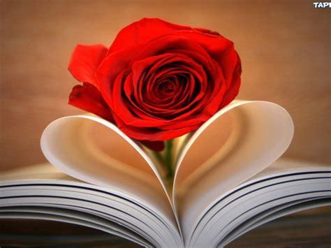 kwiatek zeszyt czerwona roza serce wallpaperscom