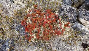 Lichens That Live In The Tundra Sciencing
