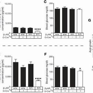 Pdf B1 Adrenergic Receptor Deficiency In Ghrelin
