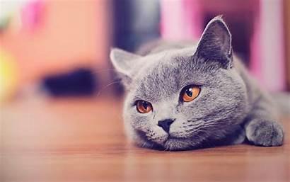 Cat Cats Fanpop Wallpapers Kitty Kitten Kittens