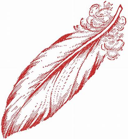 Feather Illustrations Illustration Graphics Fairy Graphicsfairy Clip