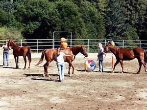 Equine Research Foundation - Horse Behavior, Horse ...