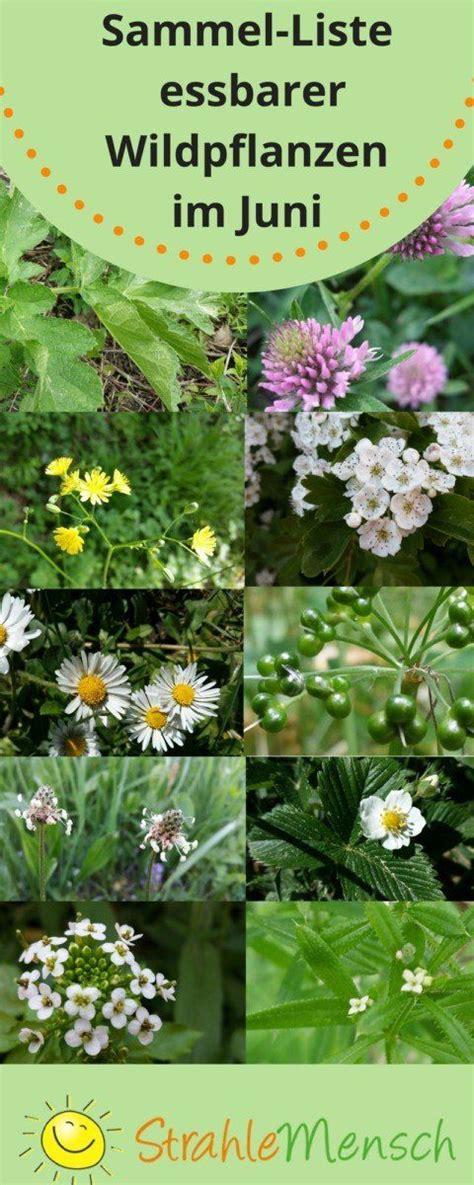 Garten Pflanzen Essbar by Sammel Liste Essbare Wildpflanzen Juni Arche Noah