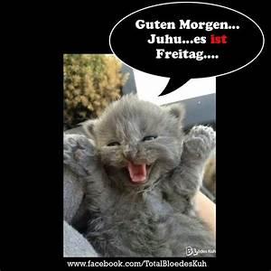 Katze Guten Morgen guten morgen katze essen guten morgen