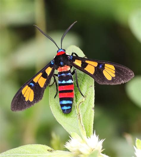 colorful insects treknature colorful insect photo