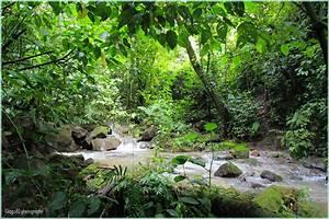 rainforest | iago80