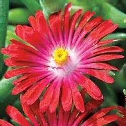 images  plants zone   pinterest
