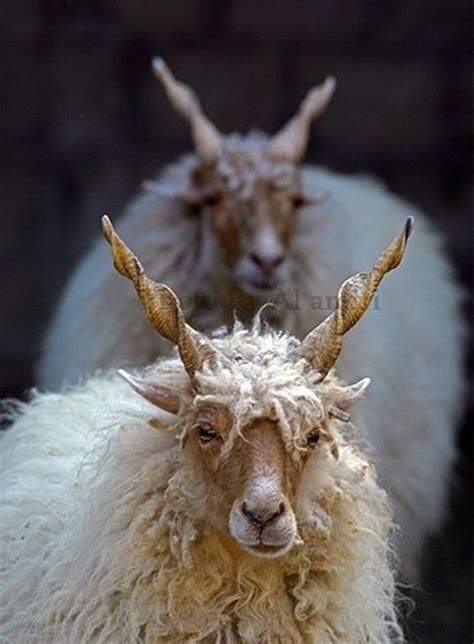 40 Beautiful Pictures Of Animals With Horns
