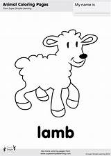 Lamb Coloring Pages Had Mary Kangaroo Simple Worksheets Super Flashcards Animal Activities Learning Songs Baby Little Supersimple Kaynak Supersimpleonline Supersimplelearning sketch template
