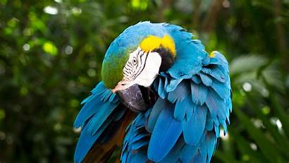 Macaw Yellow Parrot 4k Animals Wallpapers Close