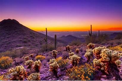 Desert Spring Sunset Scottsdale Convention Visitors Courtesy