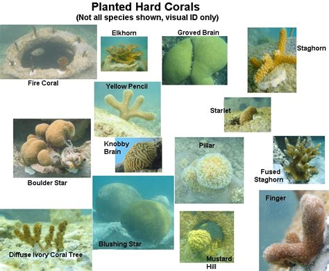 coral types corals hard cozumel cancun
