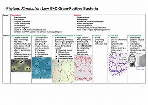 Micr2208 - Diversity Of Gram Positive Bacteria Table