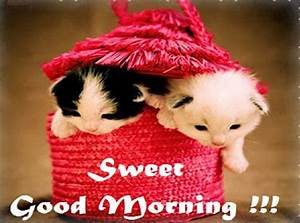 Cute Good Morning hd wallpaper Good Morning Images