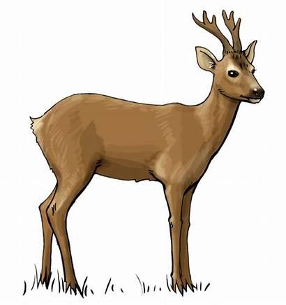 Deer Clip Clipart Hunting Transparent Scene Woodland