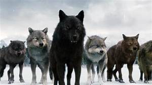 Post your favorite picture of taylor with any of the wolf ...