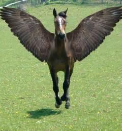 Real Pegasus Horse
