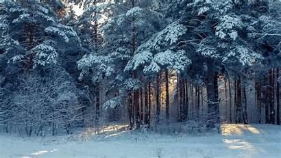 Winter Snow Landscape Forest Wallpapers Trees 4k