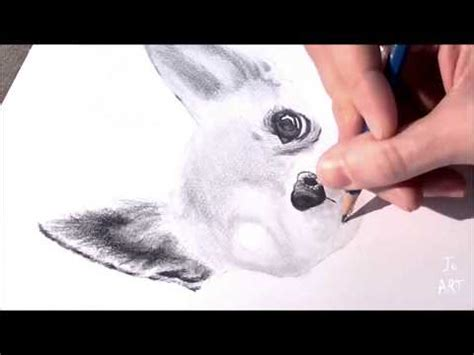 drawing   draw  realistic dog  pencil speed drawing chihuahua youtube