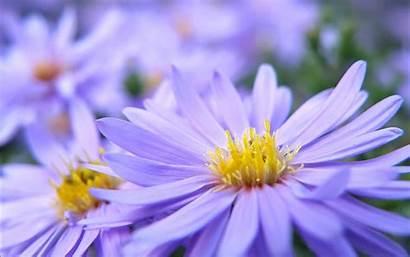 Pretty Flowers Wallpapers Violett 1200 Flower Backgrounds