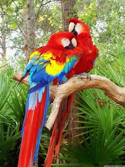 Bird Parrot Wallpapers Backgrounds Birds Parrots Macaw