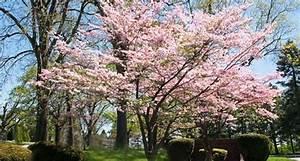Kleine Bäume Für Garten : hausb ume f r kleine g rten formgeh lze haus b ume b ume garten garten anpflanzen ~ A.2002-acura-tl-radio.info Haus und Dekorationen