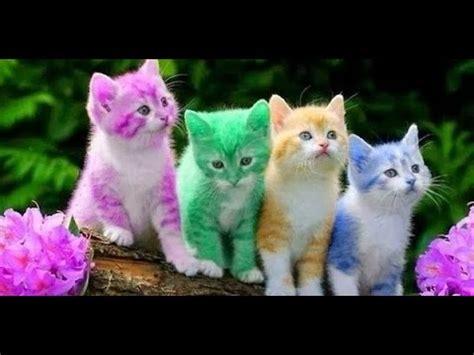 funny cat  funny animal funny cat funny animals