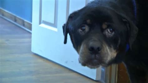 abandoned dog johnstown recovering
