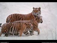 Winter Wildlife Animals