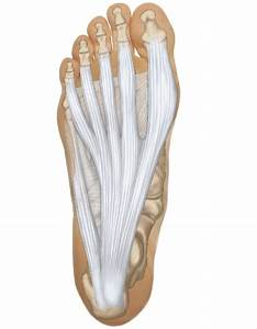 This Is A View Of The Bottom  Plantar Side  Of The Foot