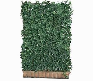 Immergrüne Kletterpflanze Für Zaun : die besten 17 bilder zu gartengestaltung auf pinterest ~ Michelbontemps.com Haus und Dekorationen