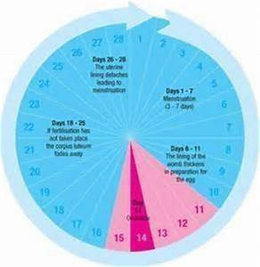 Calendar Method Fertility Chart Know Your Ovulation Period Using Calendar Method Visihow