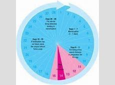 Know Your Ovulation Period Using Calendar Method VisiHow